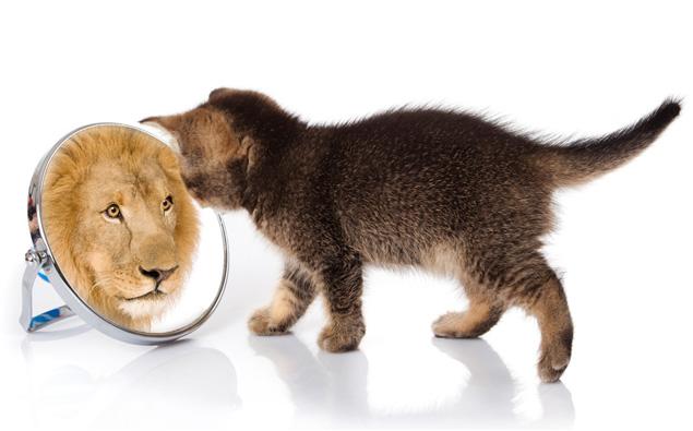 gato olhando no espelho e se vendo leão
